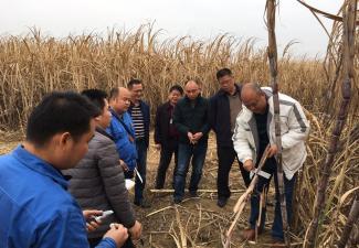 广糖集团检查组到红河制糖公司开展  农务交叉检查工作